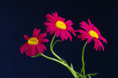 стоцвет Стоковые Изображения
