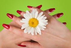 стоцвет Стоковые Фото