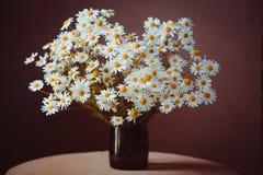 стоцвет Стоковое Фото