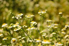 стоцвет Стоковое Изображение