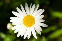 стоцвет Стоковое фото RF