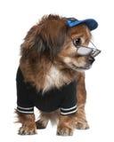 стоять стекел собаки crossbreed одежд Стоковое Изображение RF