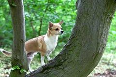 Стоящая собака стоковое изображение rf
