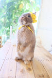 Стоящий кролик Стоковые Изображения