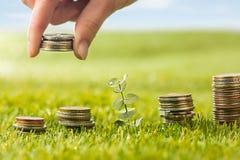 Столбцы монеток на траве Стоковые Изображения RF