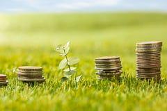 Столбцы монеток на траве Стоковая Фотография RF