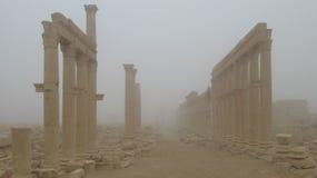 Столбцы пальмиры в тумане стоковые фото