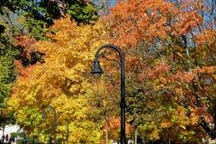 Столб лампы в цветах падения стоковые фотографии rf