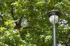 столб светильника богато украшенный Стоковые Фото