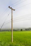 Столб электричества в полях риса Стоковые Изображения