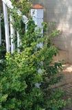 Столб Banister и крылечка с медным шпилем Стоковые Изображения RF