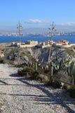 столетник на острове du frioul Стоковые Фото
