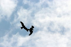 Столкновение орла стоковая фотография rf