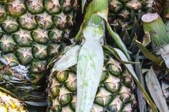 Столпотворение ананаса Стоковая Фотография