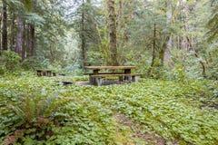 Столы для пикника в лесе Стоковая Фотография