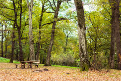 Стол для пикника парка Стоковое фото RF
