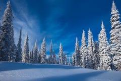 Страна катания на лыжах пущи Стоковое Изображение RF