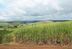 Страна сахарного тростника Стоковое Изображение RF