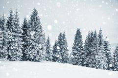 Страна чудес зимы с елями evergreen украшения рождества цветет вал красного цвета poinsettia приветствиям Стоковые Изображения RF
