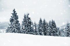 Страна чудес зимы с елями evergreen украшения рождества цветет вал красного цвета poinsettia приветствиям Стоковая Фотография RF