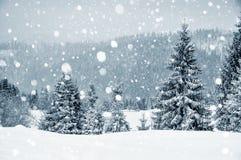 Страна чудес зимы с елями evergreen украшения рождества цветет вал красного цвета poinsettia приветствиям Стоковые Изображения