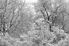 страна чудес зимы Стоковое Изображение RF