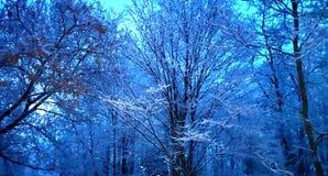 Страна чудес зимы стоковое изображение