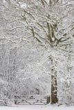 страна чудес зимы Стоковые Фотографии RF