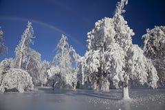 Страна чудес зимы - Ниагарский Водопад Стоковое фото RF