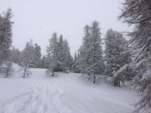 Страна чудес зимы Стоковая Фотография