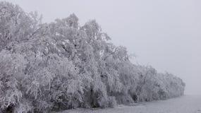 Страна чудес 3 зимы стоковые фотографии rf