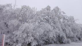 Страна чудес 5 зимы Стоковое Изображение RF