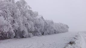 Страна чудес 20 зимы Стоковые Изображения
