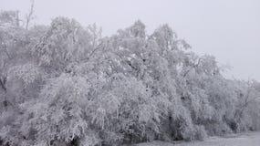 Страна чудес 19 зимы Стоковое фото RF