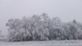 Страна чудес 13 зимы Стоковые Изображения