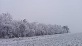 Страна чудес 8 зимы Стоковые Фото