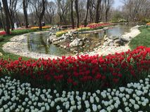Страна чудес парка Стоковое Изображение