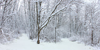 Страна чудес северное Иллиноис зимы Стоковые Изображения RF