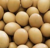 страна eggs свежая Стоковое Фото
