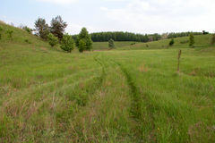 страна fields зеленая дорога Стоковое Изображение