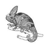 страница расцветки doodle ящерицы - zendala Стоковая Фотография