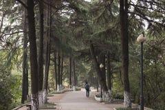 Странное дерево в саде Стоковая Фотография