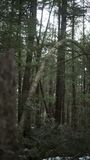 Странное дерево Стоковые Изображения RF