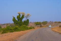 Странное зимбабвийское дерево Стоковые Фотографии RF