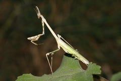 Странное насекомое любит изверг стоковое изображение