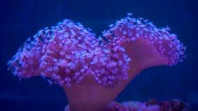 Странное подводное на жизнь видеоматериал