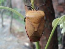странные жуки вставляют к молодой земле стоковые фото