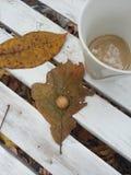 Странные листья Стоковая Фотография