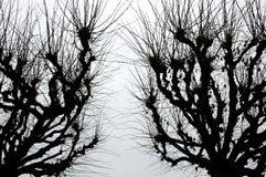 Странные страшные деревья Стоковое фото RF