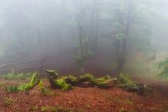 Странные твари в туманном лесе в Gorbea Стоковая Фотография RF